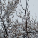 寒さようやく緩んでくるも一変、雪で再び冬に逆戻り