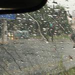 第11回 台風の中、更に厳しいヘビーウェットを体感するとこうなる